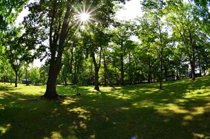 初夏の公園の写真素材 [FYI01174111]