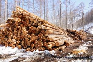材木の写真素材 [FYI01174487]