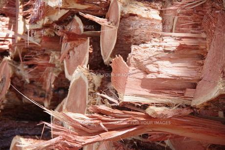 材木 の写真素材 [FYI01174489]