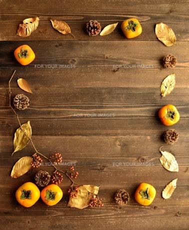 柿とまつぼっくりと落葉 フレームの写真素材 [FYI01175066]
