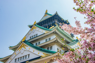 大阪城・桜の写真素材 [FYI01175231]