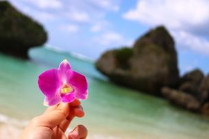 花と海の写真素材 [FYI01175267]