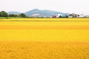 富良野の風景 田園風景の写真素材 [FYI01175332]