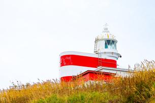 岬の上の灯台の写真素材 [FYI01175678]