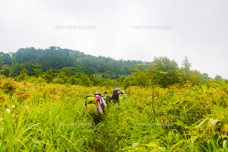 登山道 北海道小樽市塩谷丸山の写真素材 [FYI01175845]
