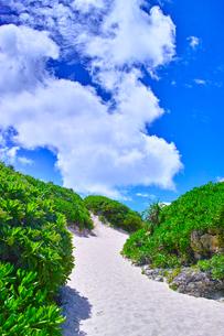 真夏の宮古島。砂山ビーチへ下りる砂の坂道の写真素材 [FYI01175936]