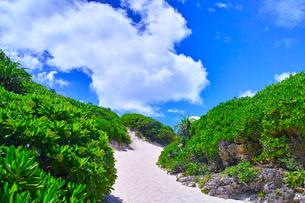 真夏の宮古島。砂山ビーチへ下りる砂の坂道の写真素材 [FYI01175937]