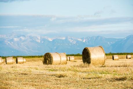 牧草ロールが広がる風景の写真素材 [FYI01176331]