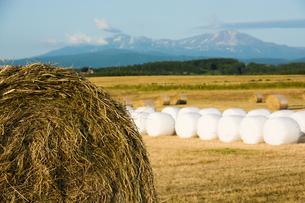 牧草ロールが広がる風景の写真素材 [FYI01176332]