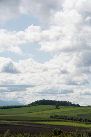 夏の丘陵畑作地帯の写真素材 [FYI01176338]