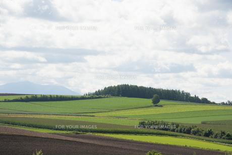 夏の丘陵畑作地帯の写真素材 [FYI01176339]