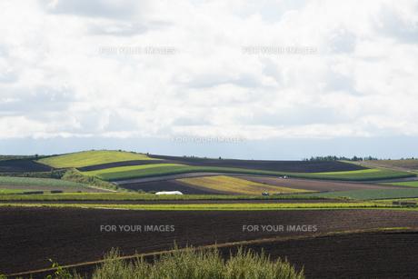 夏の丘陵畑作地帯の写真素材 [FYI01176340]