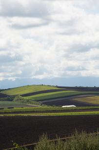 夏の丘陵畑作地帯の写真素材 [FYI01176341]