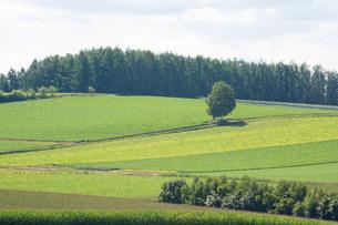 夏の丘陵畑作地帯の写真素材 [FYI01176342]
