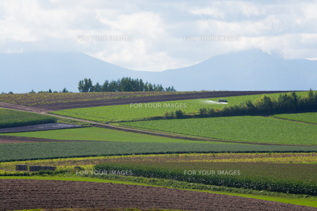 夏の丘陵畑作地帯の写真素材 [FYI01176343]