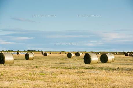 牧草ロールが広がる風景の写真素材 [FYI01176371]
