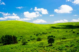 霧ヶ峰高原、車山肩から見上げる稜線の写真素材 [FYI01176635]