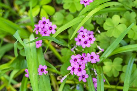 野花の写真素材 [FYI01176665]