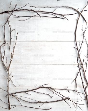枯枝のフレームの写真素材 [FYI01176756]