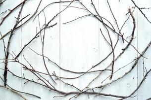 枯枝のフレームの写真素材 [FYI01176787]