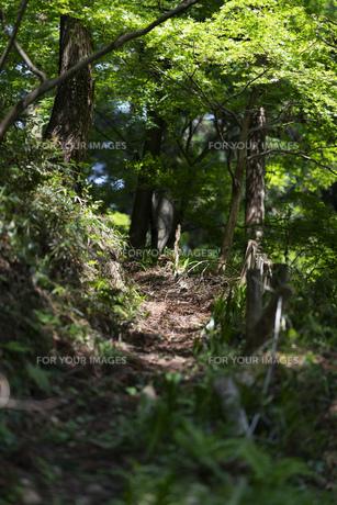 背景 山道 新緑の写真素材 [FYI01176921]
