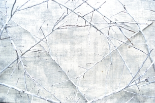 白い枯枝のフレームの写真素材 [FYI01177144]