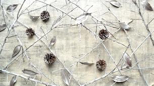 銀色の落葉とまつぼっくりと枯枝 フレーム 白背景の写真素材 [FYI01177301]