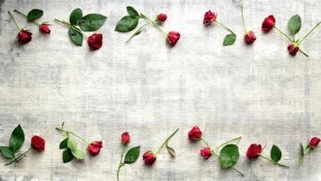赤い薔薇のフレーム 白木材背景の写真素材 [FYI01177385]