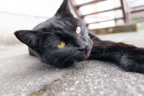 日本の屋外で暮らす黒猫の写真素材 [FYI01177712]