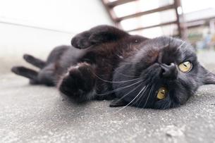 日本の屋外で暮らす黒猫の写真素材 [FYI01177714]