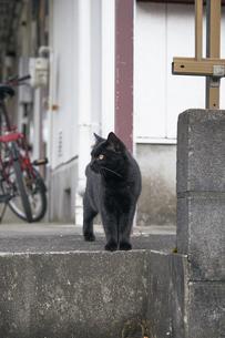 日本の屋外で暮らす黒猫の写真素材 [FYI01177718]