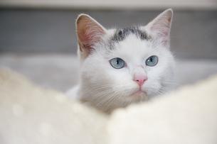 ブロックの隙間から顔を出す子猫の写真素材 [FYI01177720]