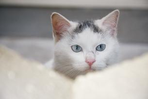ブロックの隙間から顔を出す子猫の写真素材 [FYI01177721]