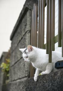 ブロックの隙間から顔を出す子猫の写真素材 [FYI01177731]