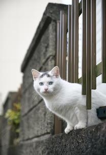 ブロックの隙間から顔を出す子猫の写真素材 [FYI01177732]