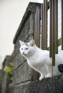 ブロックの隙間から顔を出す子猫の写真素材 [FYI01177733]