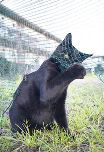 日本の屋外で暮らす黒猫の写真素材 [FYI01177745]