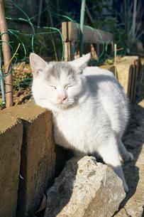 日本の屋外で暮らす子猫の写真素材 [FYI01177757]