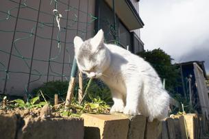 日本の屋外で暮らす子猫の写真素材 [FYI01177763]