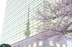 鏡越しのスカイツリーでお花見の写真素材 [FYI01177764]