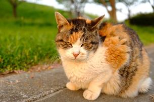 ふてくされているような猫の顔の写真素材 [FYI01177771]