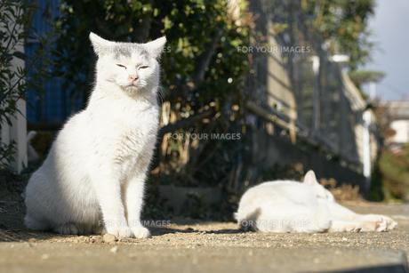 日本の屋外で暮らす子猫の兄弟の写真素材 [FYI01177773]