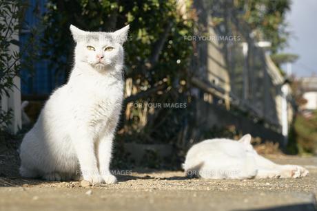 日本の屋外で暮らす子猫の兄弟の写真素材 [FYI01177775]