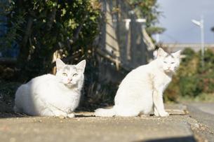 日本の屋外で暮らす子猫の兄弟の写真素材 [FYI01177776]