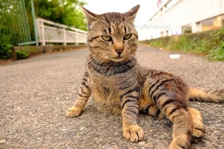 セクシーポーズの猫の写真素材 [FYI01177797]