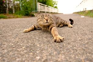 伸びをする猫の写真素材 [FYI01177799]