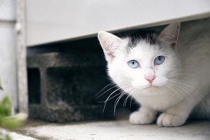 日本の屋外で暮らす子猫の写真素材 [FYI01177813]