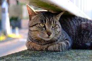 いつもの場所でご機嫌な猫の写真素材 [FYI01177816]