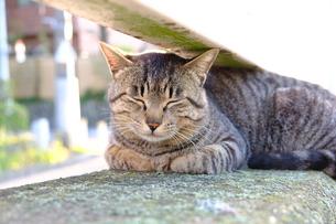 お気に入りの場所で眠る猫の写真素材 [FYI01177817]