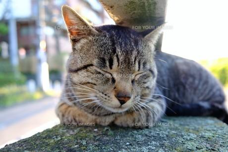 お気に入りの場所で眠る猫の写真素材 [FYI01177820]